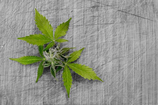 טיפול בהתמכרות לסמים קלים